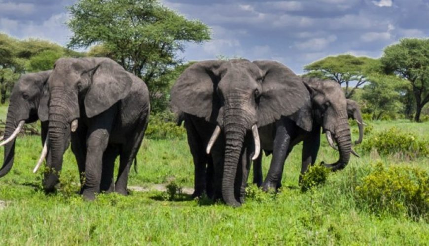 2 DAYS SAFARI FROM MOMBASA BOOK WITH US