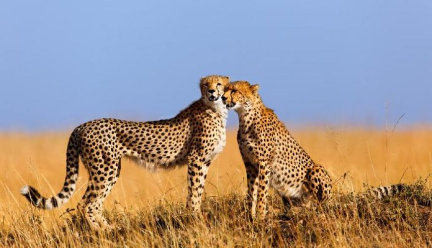 7 DAYS BUDGET SAFARI CONTACT US FOR BOOKINGS